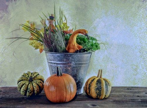 autumn  harvest  halloween