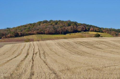 autumn  arable  field