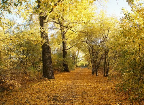 autumn  yellow  path