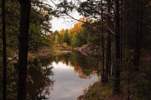 autumn  landscape  forest