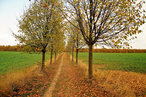autumn  path  the trail