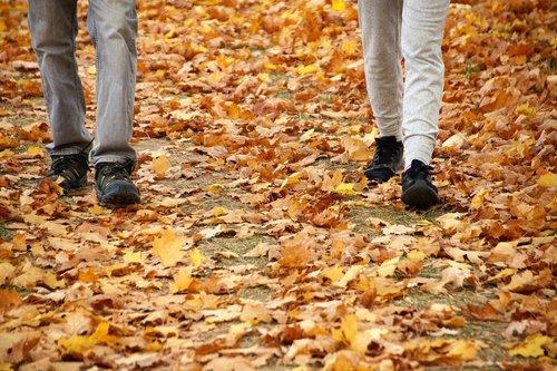 autumn  path  the trail