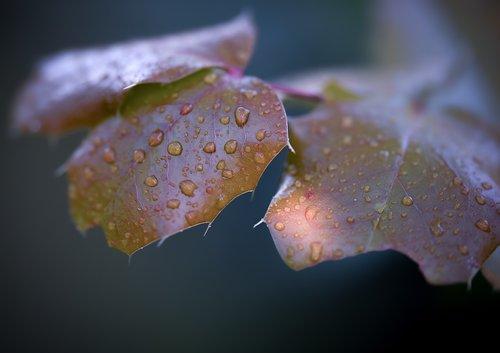 autumn  sonbahar  macro