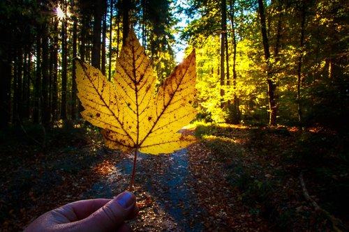autumn  fall foliage  forest