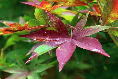 autumn  autumn leaves  colorful