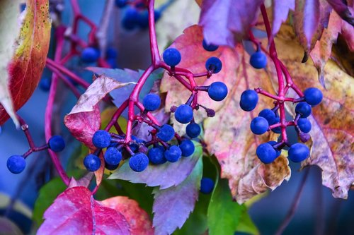 autumn  powerful colors  harmonious