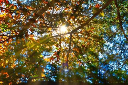 autumn  sunbeams  tree