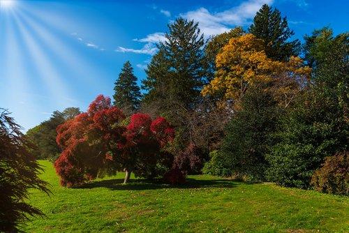 autumn  trees  vivid colors