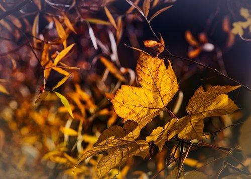 autumn  leaves  mood