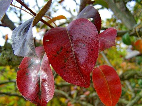 autumn  discoloration  nature