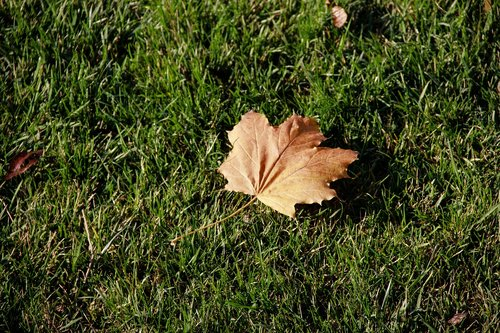 autumn  dry leaves  green grass