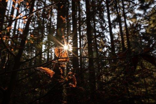 autumn  forest  sun