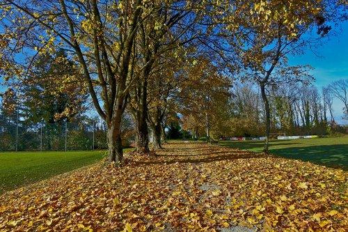autumn  late autumn  leaves