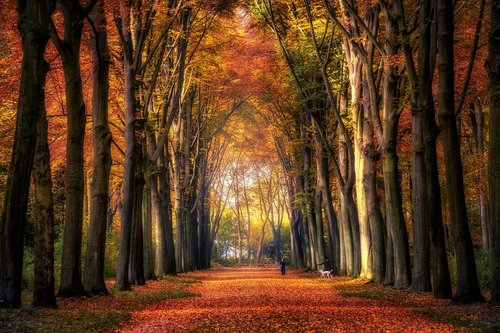 autumn  forest  avenue