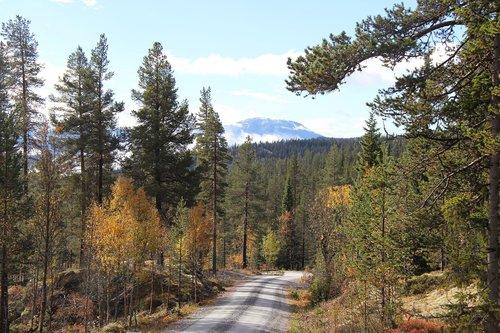 autumn  telemark norway  tindefjell