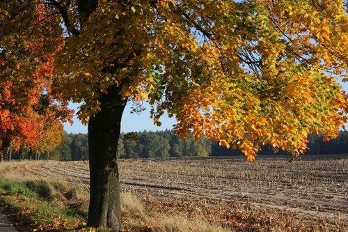 autumn  leaves  tree