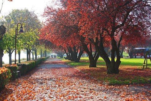 autumn  colorful  fall foliage