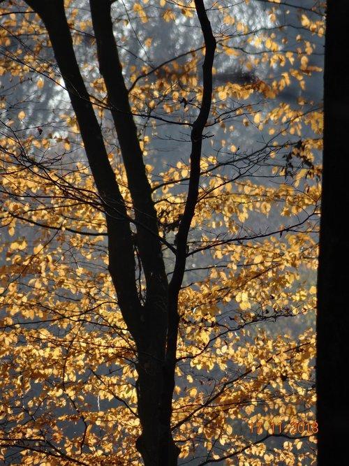 autumn  foliage  trees