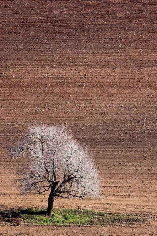 autumn  nature  tree