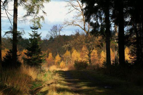 autumn autumn forest forest