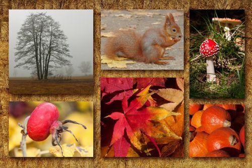 autumn collage autumn mood