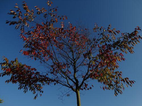 autumn fall leaves blue sky