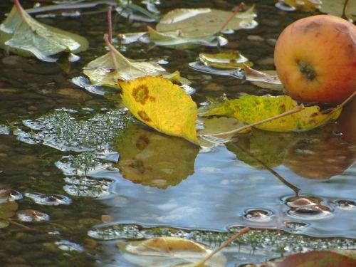 autumn water nature
