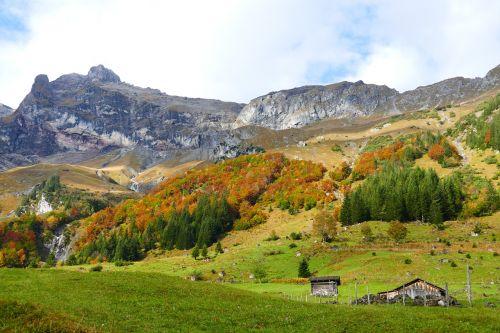 autumn autumn forest colorful