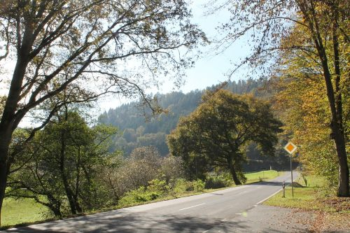 autumn road trees