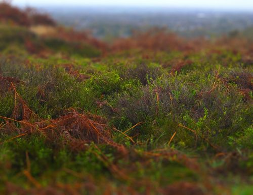 autumn misty damp