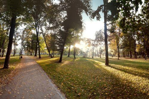 autumn park the sun