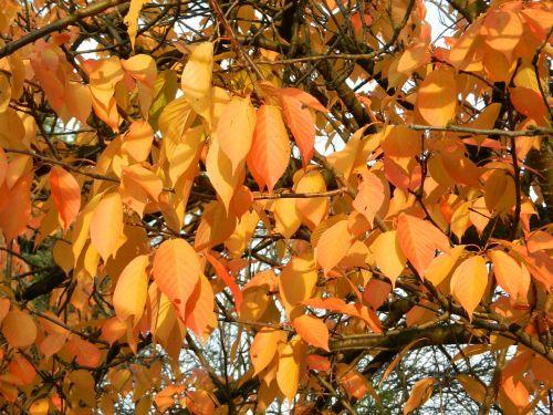 autumn autumn gold autumn leaves