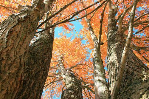autumn leaves vibrant