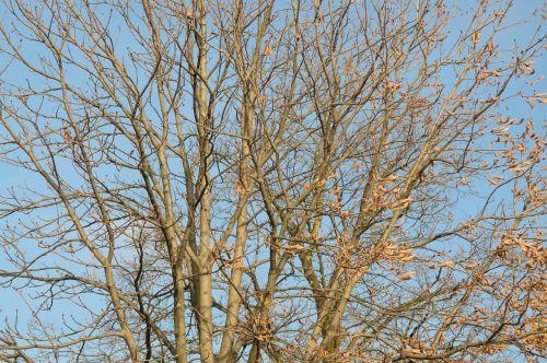 autumn aesthetic branches