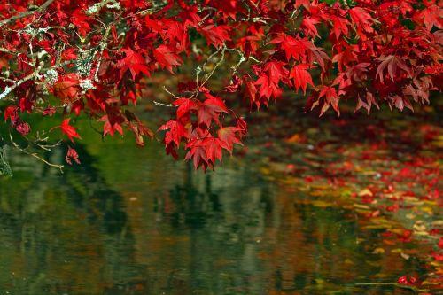 autumn leaves autumnal leaves