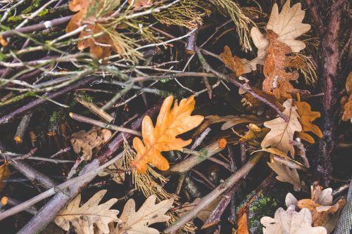 autumn fall mess