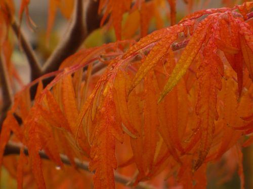 autumn leaves wood