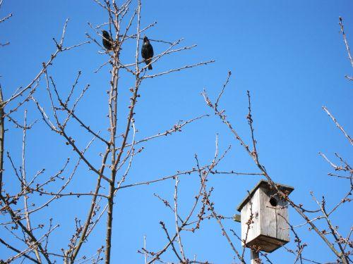 aviary bird feeder autumn