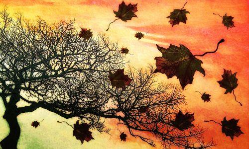 autumn fall nature
