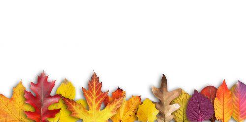 autumn banner border