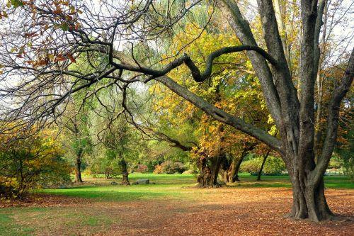 autumn fall garden