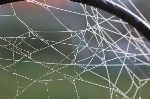autumn cobweb metal