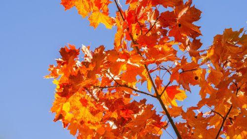 autumn bright red