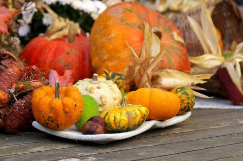 autumn freestyle bite decoration