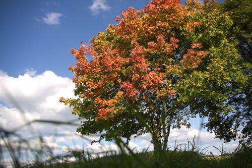 autumn beginning of autumn autumn beginning