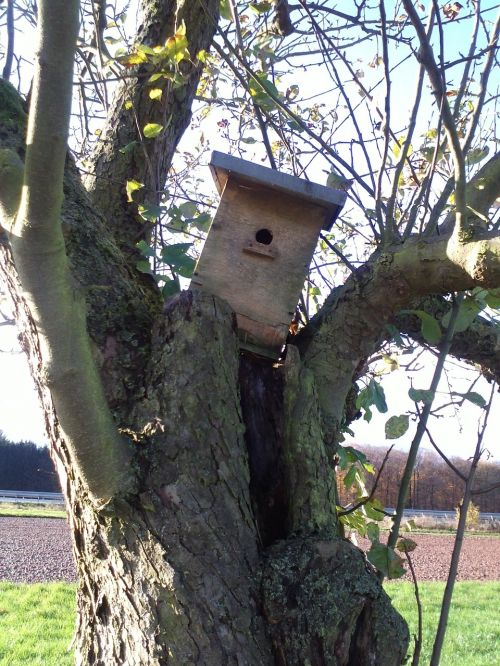 autumn bird feeder tree