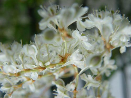 autumn flowers white