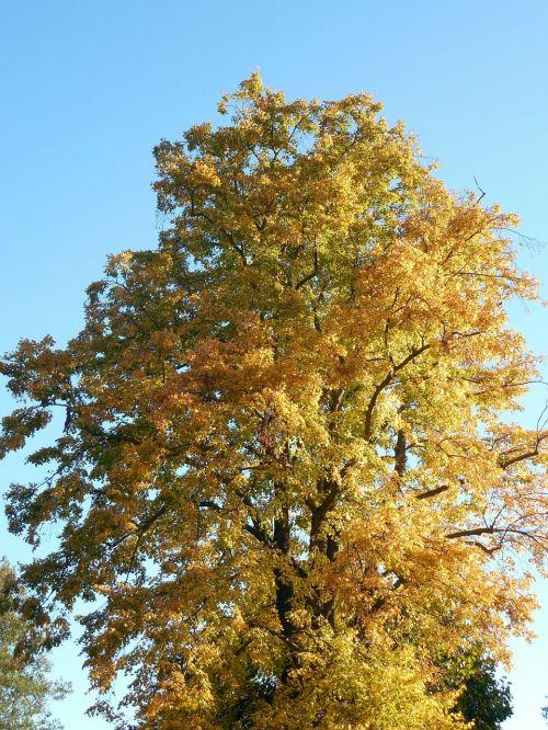 autumn leaves emerge