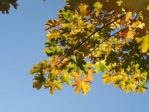 autumn sunning leaves