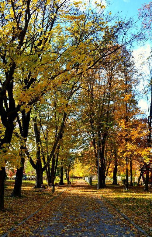 autumn trees leaves